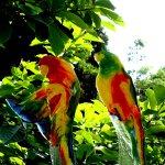 Glas, kunst & design - uniek, bijzonder koppel vogels 'Lovebirds' papegaaien - Karbownik - H 34 cm € 189,-
