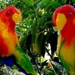 Unieke glaskunst, dit prachtig koppel vogels in modern kleurrijk glas kleurt letterlijk uw dag, elke dag weer ...