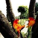 Kunst en kleur komen samen in deze leuke glaswerken met vogels die hun liefde tonen voor elkaar ...