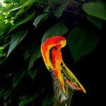 Bijzondere unieke vogel in modern glas - papegaai in mooie kleuren - Katarzyna Karbownik - H 33 cm € 99,-